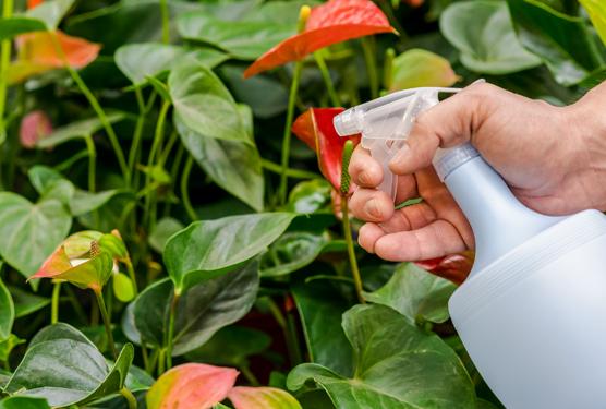 Cuidados y soluciones para el cultivo