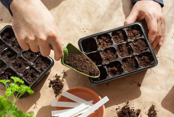 Preparación y siembra en macetas